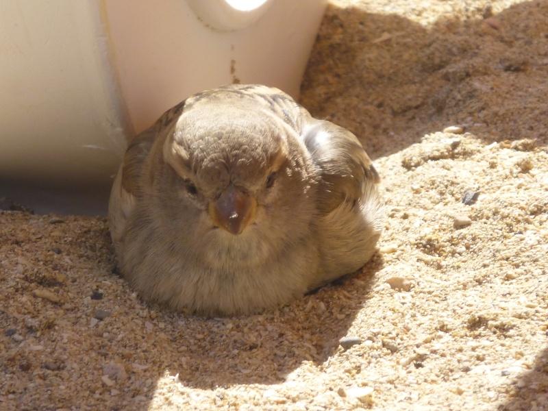 Canary Islands, Lanzarote, Playa Blanca, 2012, holiday 17410