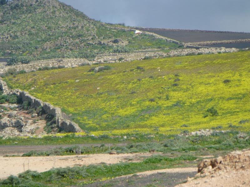 Canary Islands, Lanzarote, Playa Blanca, 2012, The Northern Tour 57210