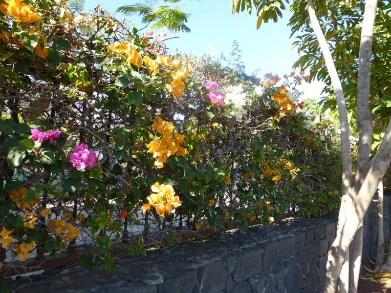 Canary Islands, Lanzarote, Playa Blanca, 2012, Walk from Dorada beach through Town 87010