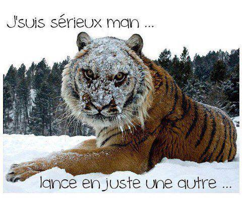 Humour en image ... - Page 6 Tigre10