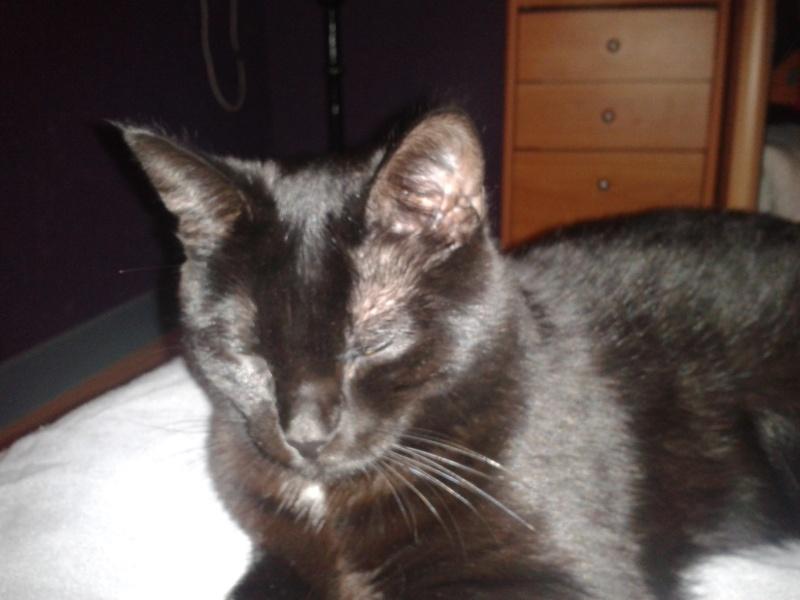 Harlem, chaton mâle noir, né en juillet 2012 - Page 1 2013-010