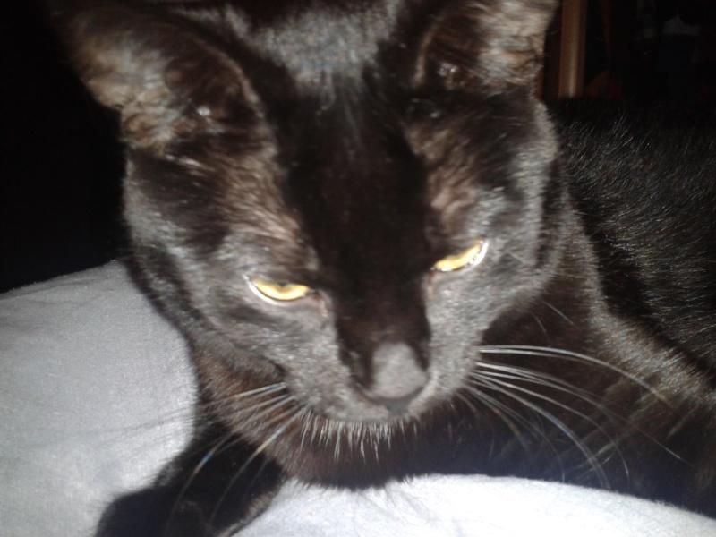 Harlem, chaton mâle noir, né en juillet 2012 - Page 1 2013-011