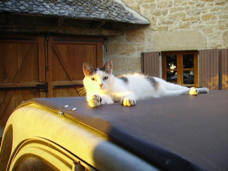 Ce chat me cherche... Riri_s10