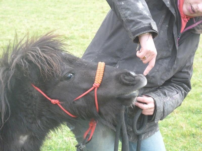 (Dept19) BIJOUX, Shetland, réservé par Lola1605 !!!! (Octobre 2012) - Page 5 Pepi10