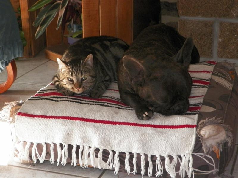 GABY, chatonne tigrée noir et blanche, née en 2011 - Page 2 100_0510