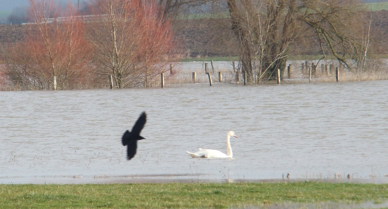 La Moselle profonde Dsc07846