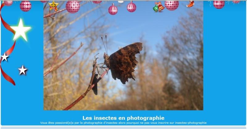 Insectes Photographie : forum  Projet10