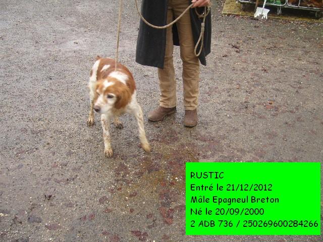 RUSTIC Epagneul Breton 2ADB736 / 250269600284266 P1140844