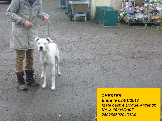 CHESTER Dogue Argentin 250269602013194 P1150021
