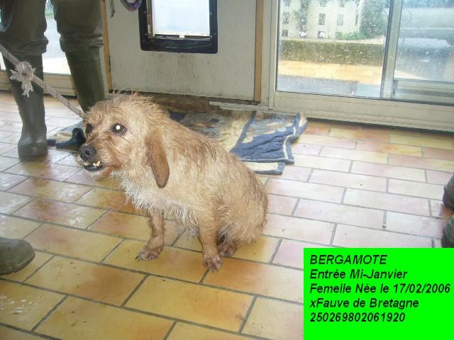 BERGAMOTE xFauve de Bretagne 250269802061920 P1150026