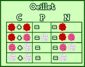 [Guide] Les croisements de fleurs. - Page 5 Oeille10