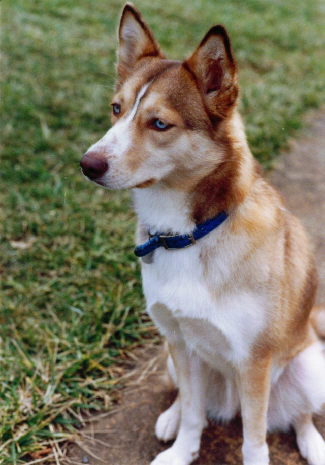 In memory of my beautiful Sandy - 1989-2007 Sandy_10