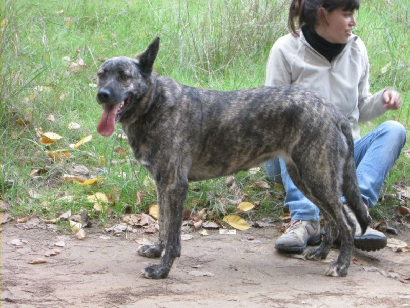 Giena, chienne de Berger, Mai 2009  67951_10