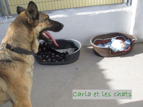 CARLA - CROISE BA/BB Carla_10