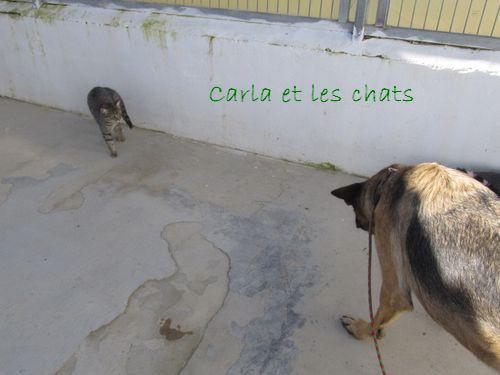 CARLA - CROISE BA/BB Carla_12