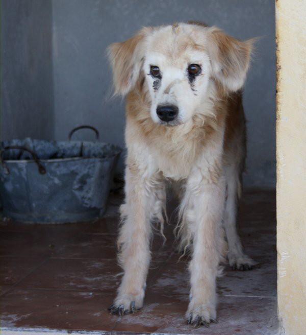 Guss, un vieillard de 16 ans Gus110