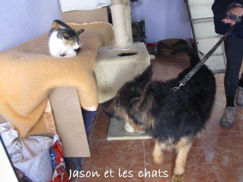 JASON - CROISE BA POILS LONGS Jason_10