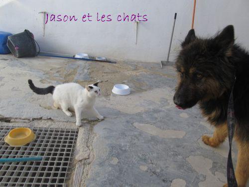 JASON - CROISE BA POILS LONGS Jason_11