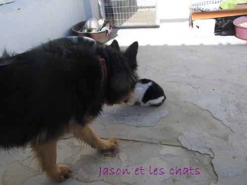 JASON - CROISE BA POILS LONGS Jason_12