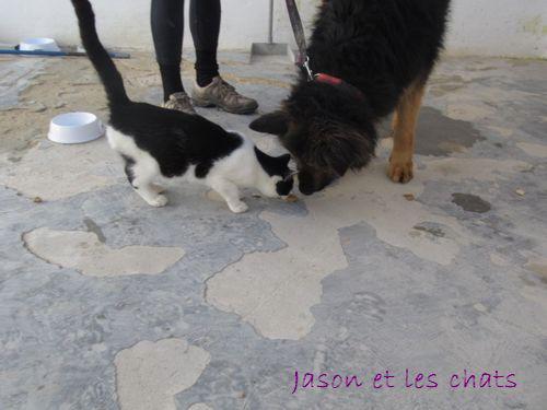 JASON - CROISE BA POILS LONGS Jason_13
