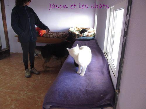 JASON - CROISE BA POILS LONGS Jason_14