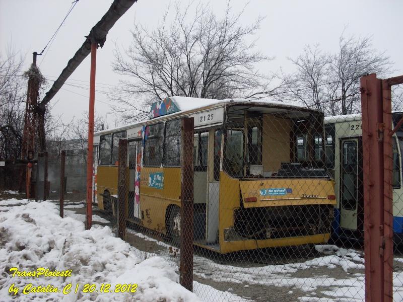 Parcul Rece Sdc11943