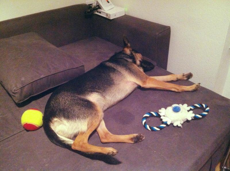 Occuper un chien qui ne joue pas Photo11