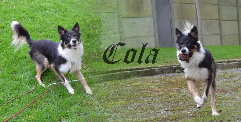 border - [Adopté] Cola, Border Collie, actuellement en FA, à adopter. Sans_t15
