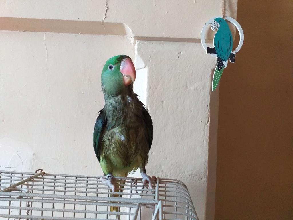 Concours photo n°14: Nos oiseaux prennent le bain  20190710
