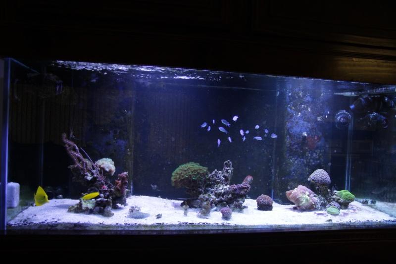 Iwagumi Reef Img_6511