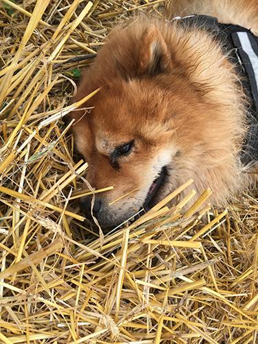 La chaleur, la canicule et vos chiens - Page 4 Micani10