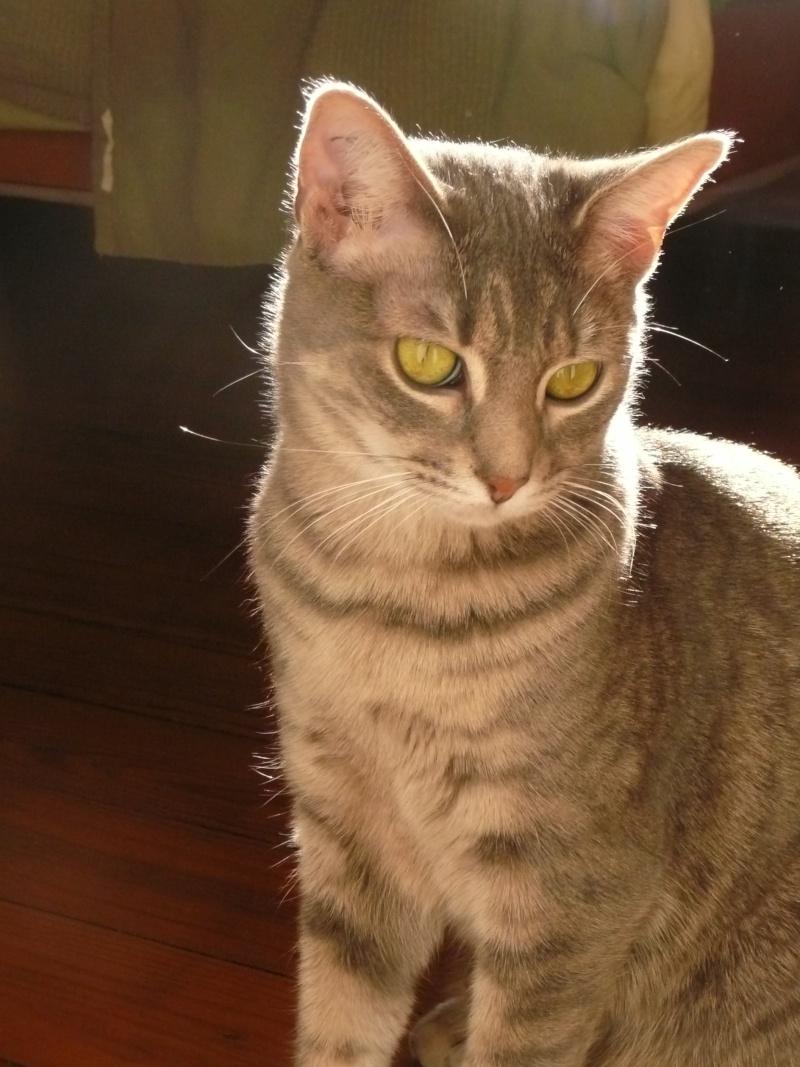 Yéna, jeune chatte de 1 an (n° 250269500538164) Yana_010