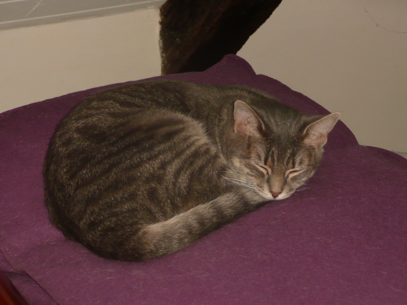 Yéna, jeune chatte de 1 an (n° 250269500538164) Yana_012