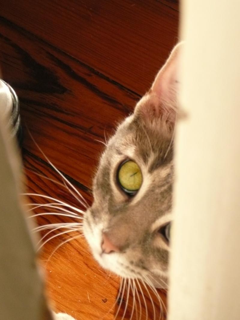 Yéna, jeune chatte de 1 an (n° 250269500538164) Yana_013