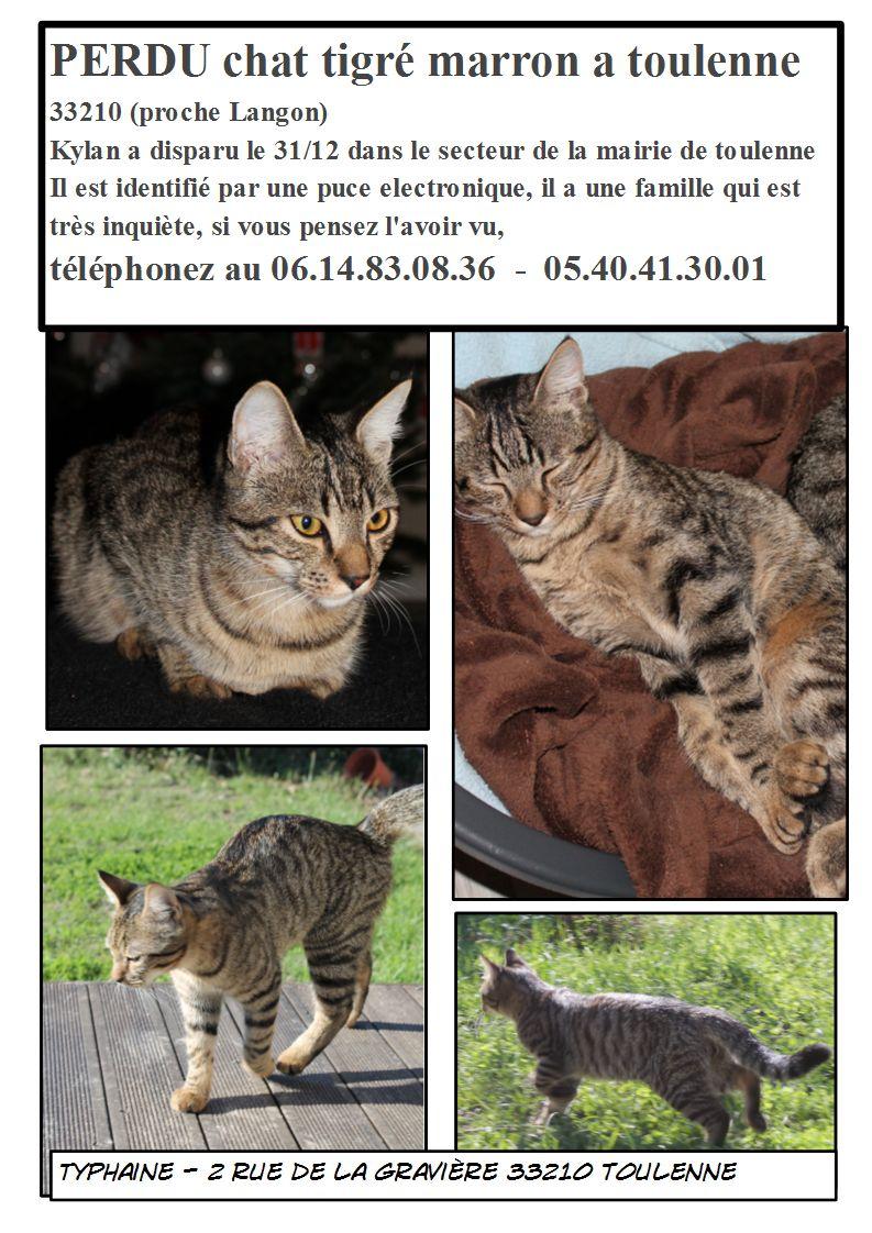 Perdu Kylan, chat mâle tigré marron aux yeux marrons Toulenne 33210 Affich11