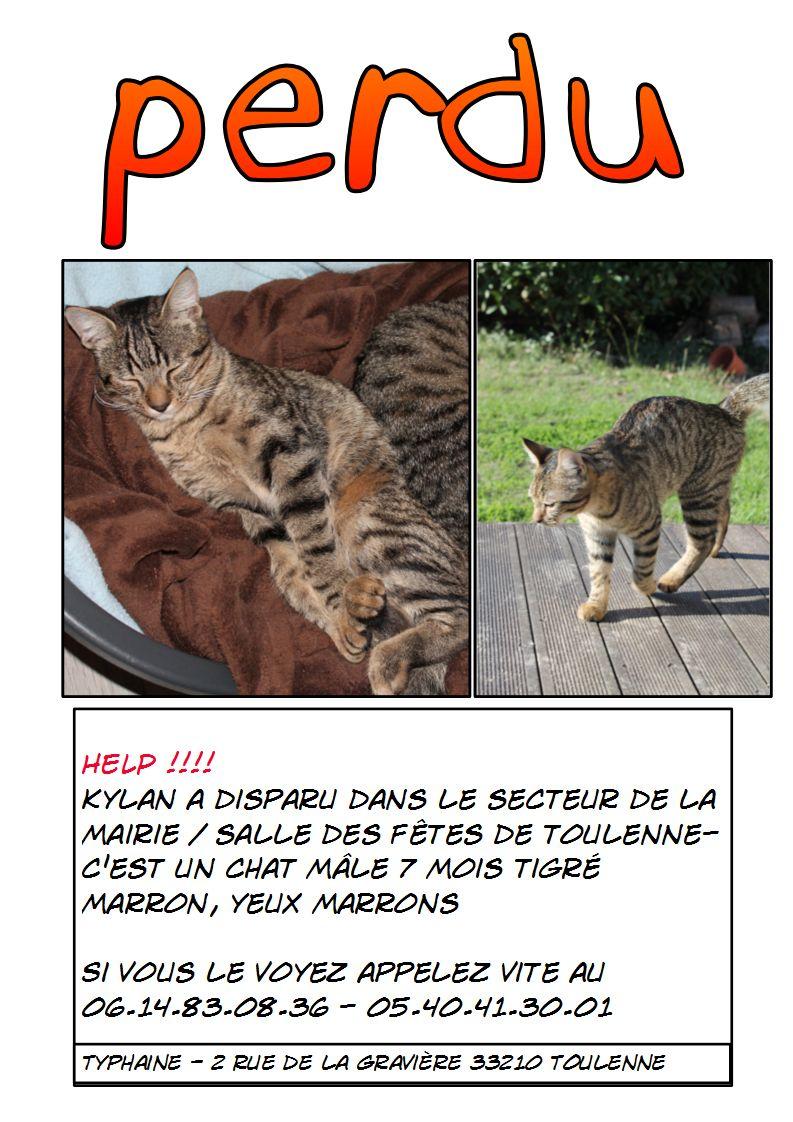 Perdu Kylan, chat mâle tigré marron aux yeux marrons Toulenne 33210 - Page 2 Kylan_12