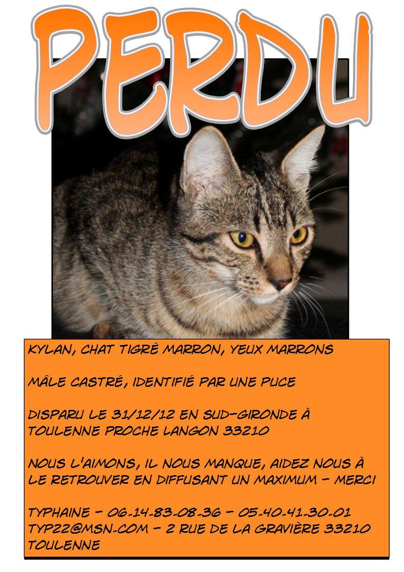 Perdu Kylan, chat mâle tigré marron aux yeux marrons Toulenne 33210 - Page 2 Kylan_14