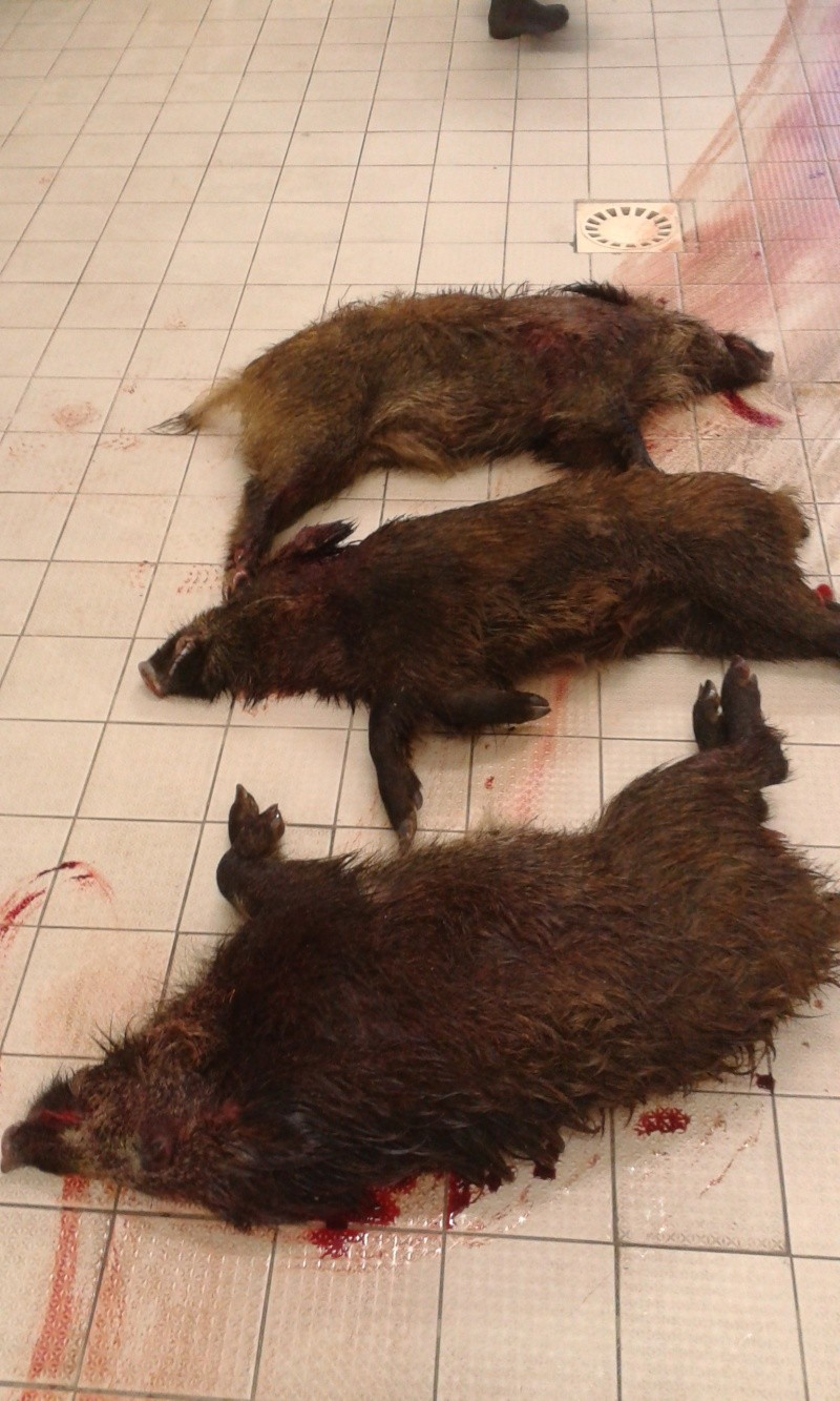 Saison de chasse au Grand Gibier 2012/2013 - Page 40 20130210