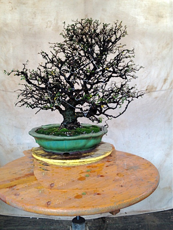 Does this pot and tree cobination work for you. Tree110