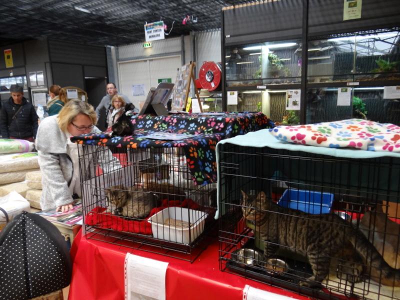 Week end adoption chats et chiens a la jardinerie de Fontenay le 3 et 4 Novembre 2018 Dsc03933
