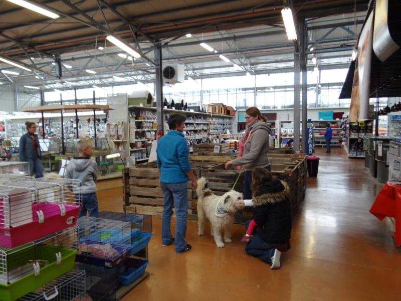 Week end adoption chats et chiens a la jardinerie de Fontenay le 3 et 4 Novembre 2018 Dsc03934