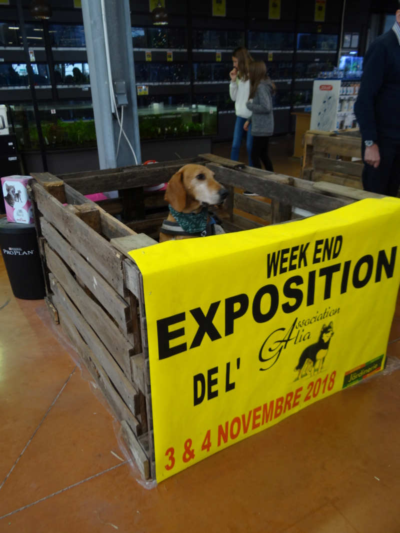 Week end adoption chats et chiens a la jardinerie de Fontenay le 3 et 4 Novembre 2018 Dsc04020