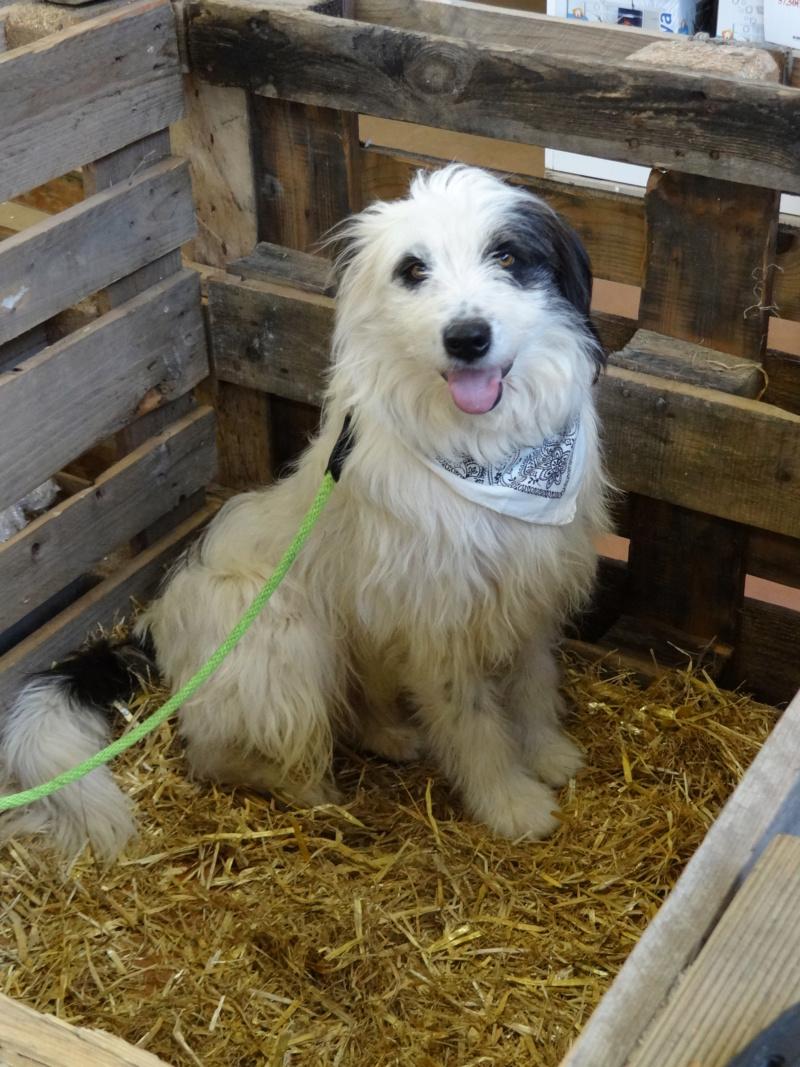 Week end adoption chats et chiens a la jardinerie de Fontenay le 3 et 4 Novembre 2018 Dsc04022