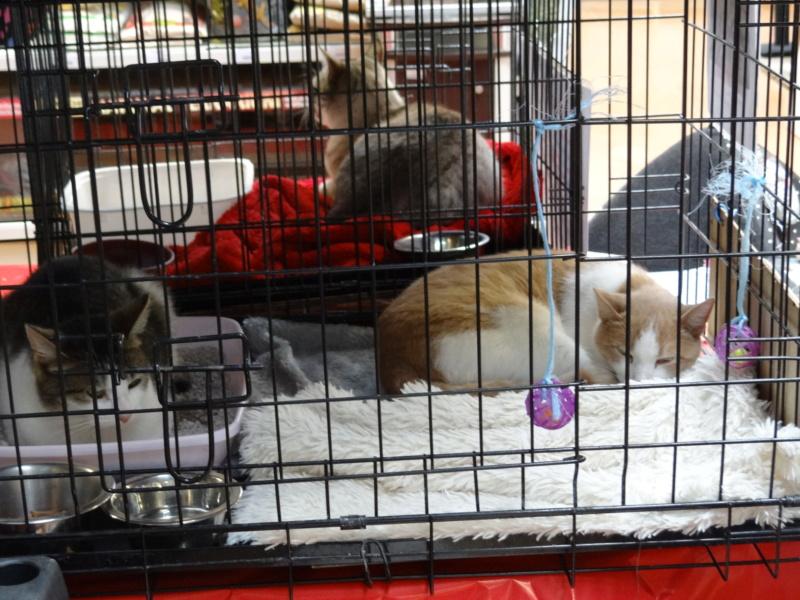 Week end adoption chats et chiens a la jardinerie de Fontenay le 3 et 4 Novembre 2018 Dsc04026