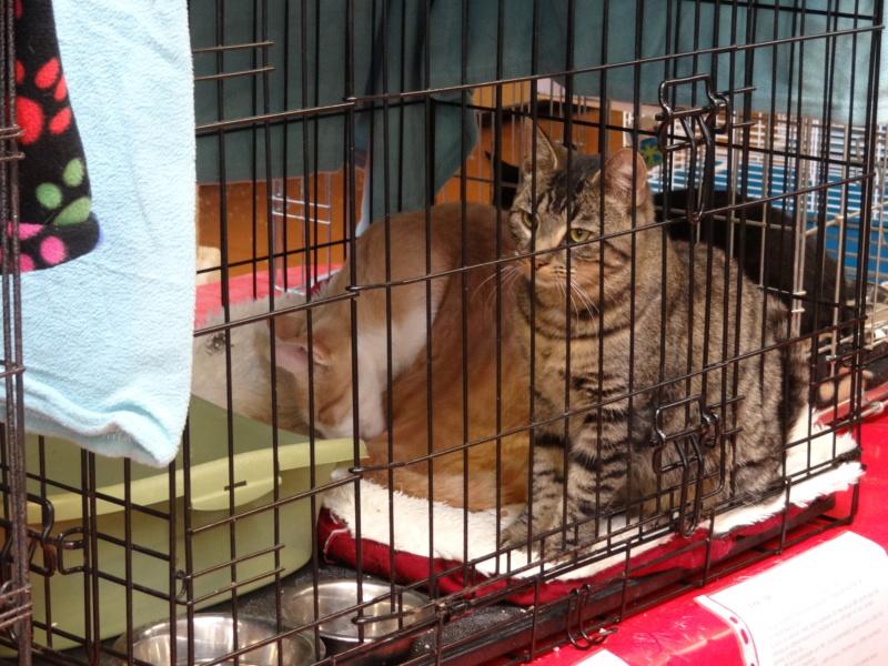 Week end adoption chats et chiens a la jardinerie de Fontenay le 3 et 4 Novembre 2018 Dsc04027