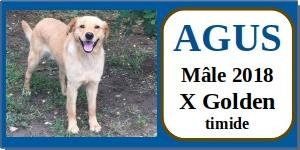 SERBIE - chiens prêts à rentrer (refuge de Bella et pensions) - Etat au 15 aout 2021 Agus110