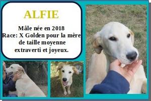 SERBIE - chiens prêts à rentrer (refuge de Bella et pensions) Alfie10
