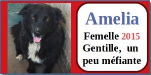 SERBIE - chiens prêts à rentrer (refuge de Bella et pensions) - Etat au 15 aout 2021 Amelia10