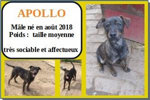 SERBIE - chiens prêts à rentrer (refuge de Bella et pensions) Apollo10