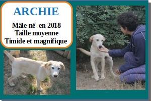 SERBIE - chiens prêts à rentrer (refuge de Bella et pensions) Archie10